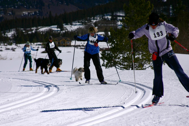 Four people with dogs in skijoring race on winter Nordic trail
