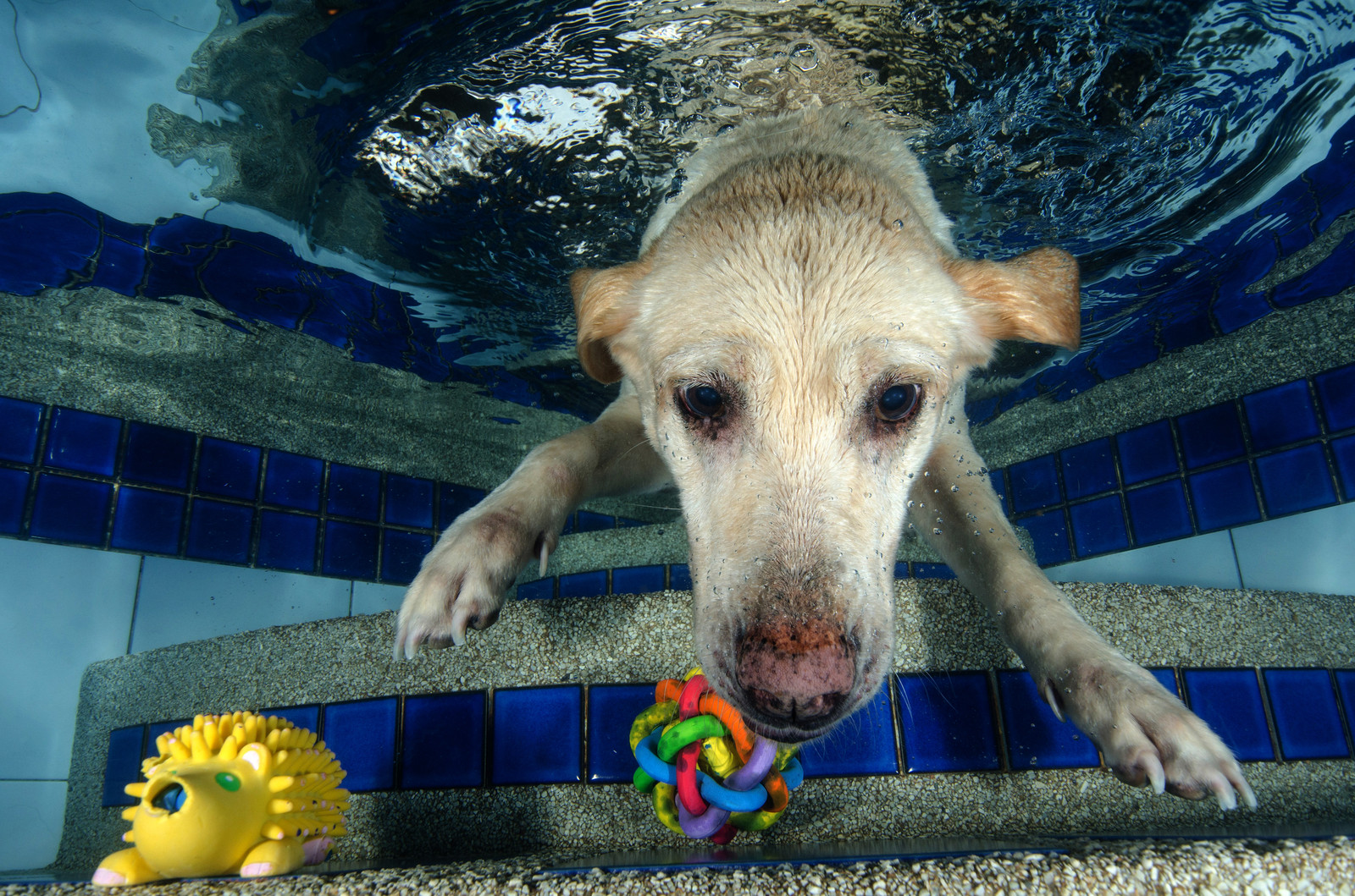 Pool PAW-ty Dog Underwater